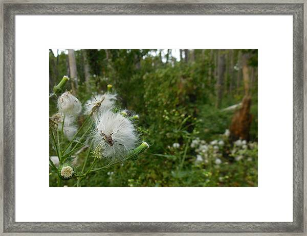 Fairy Woods Framed Print