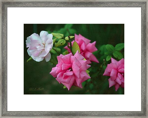 Fake Painting Of Roses Framed Print