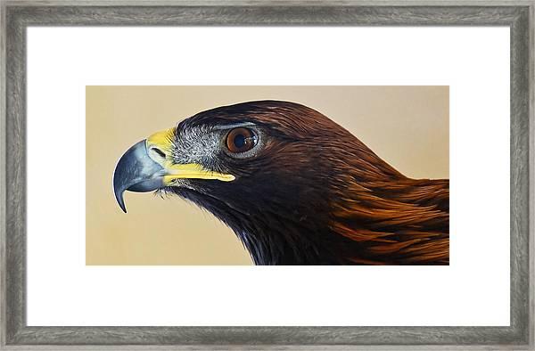 Falconer's Hawk - Harris Hawk Framed Print