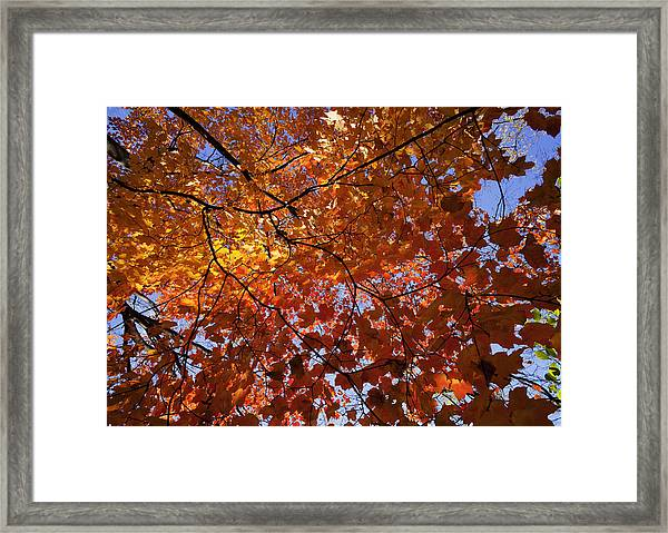 Fall 2010 14 Framed Print