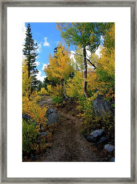 Fall Aspens In The Eastern Sierra Framed Print