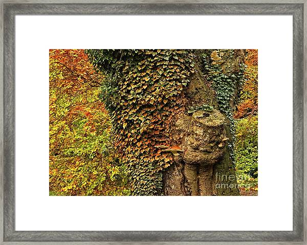 Fall Colors In Nature Framed Print