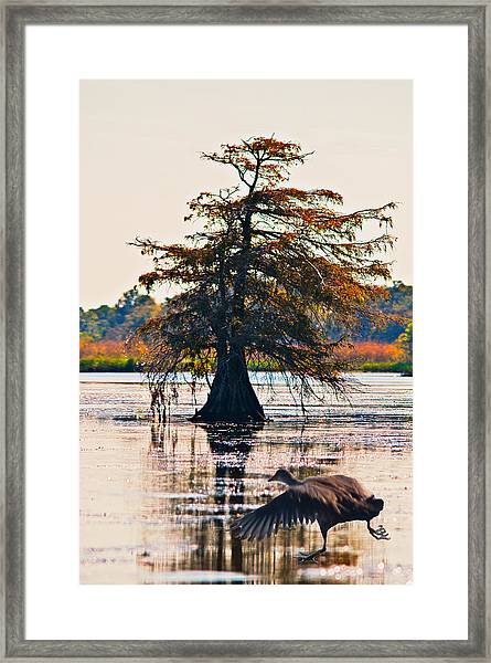 Fall Colors In The Marsh Framed Print by Bill Perry