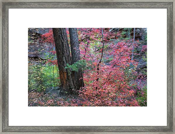Fall Colors In West Fork Of Oak Creek Canyon Framed Print