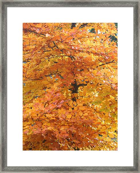 Fall Colors Framed Print by Mary Gaines
