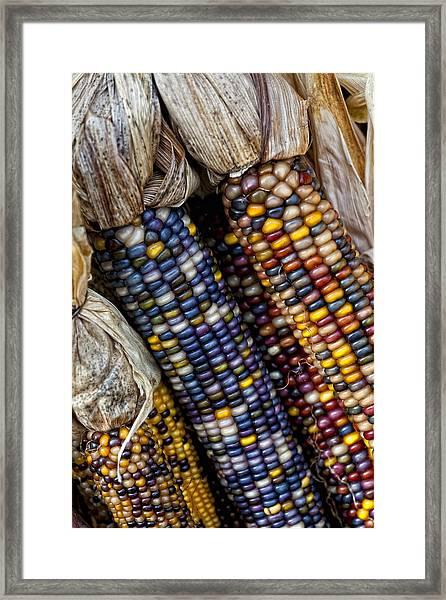 Fall Corn Framed Print