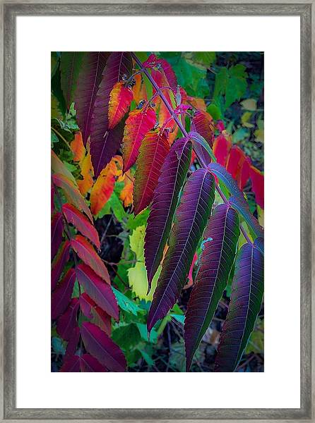 Fall Feathers Framed Print