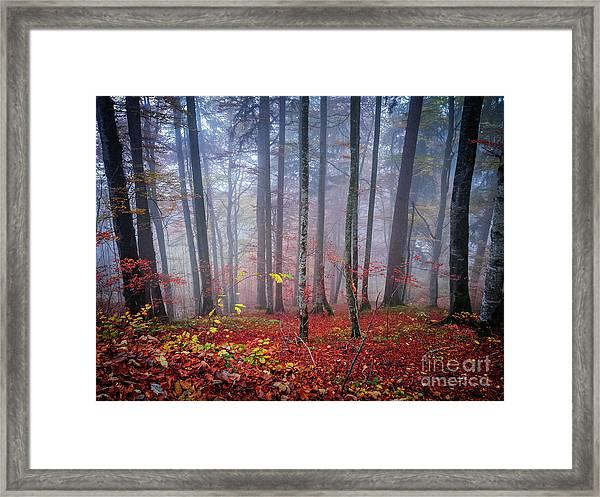 Fall Forest In Fog Framed Print