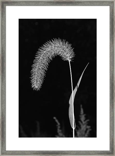 Fall Grass 1 Framed Print