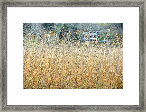 Fall Grass Framed Print