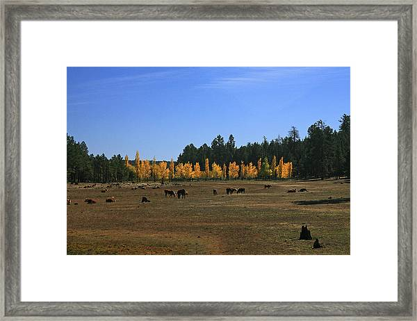 Fall In Line Framed Print