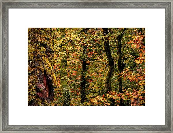 Fall Is Coming Framed Print