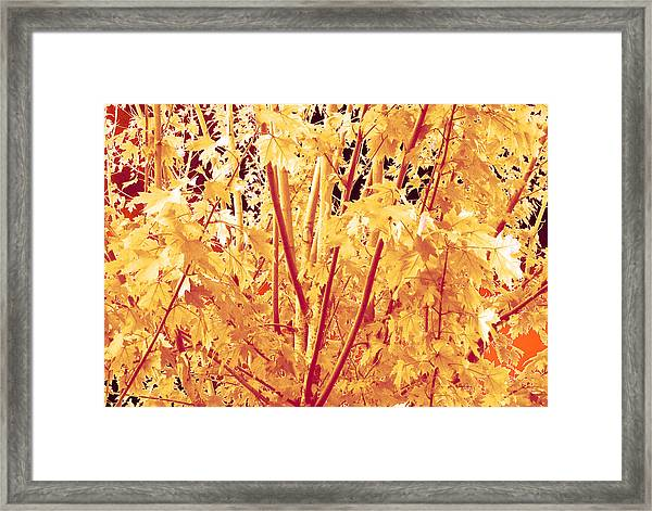 Fall Leaves #1 Framed Print