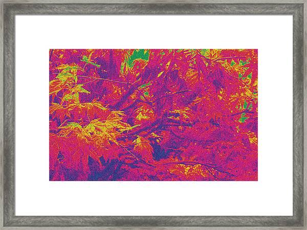 Fall Leaves #14 Framed Print