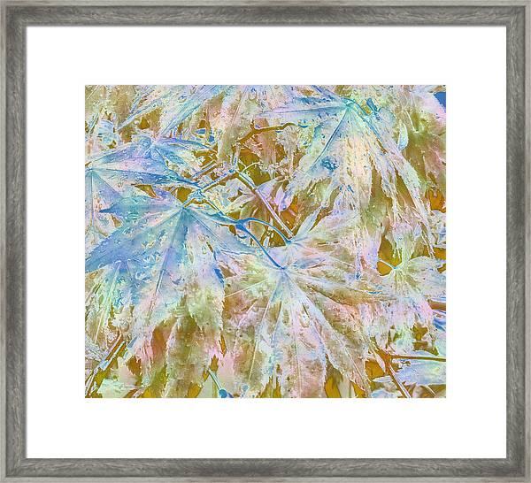 Fall Leaves #16 Framed Print