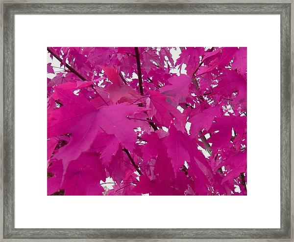 Fall Leaves #5 Framed Print