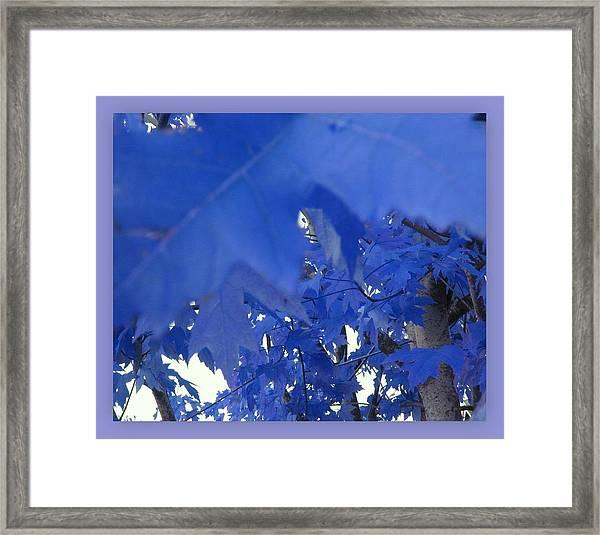 Fall Leaves #7 Framed Print