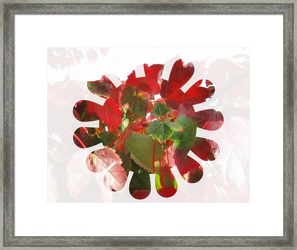 Fall Leaves #9 Framed Print