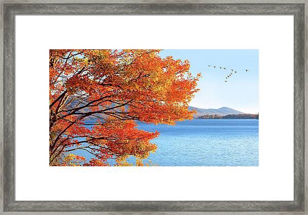 Fall Maple Tree Graces Smith Mountain Lake, Va Framed Print