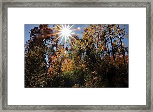 Fall Mt. Lemmon 2017 Framed Print