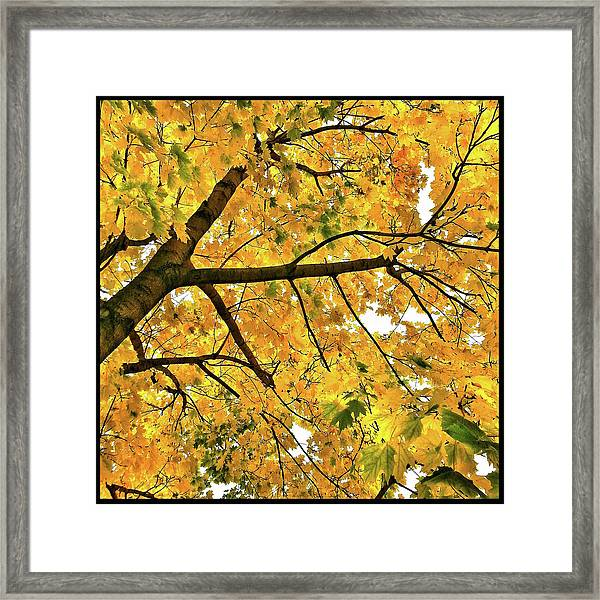 Fall On William Street Framed Print