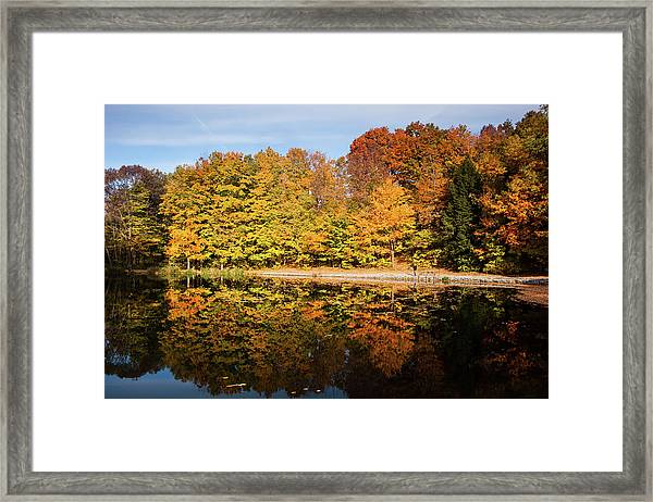 Fall Ontario Forest Reflecting In Pond  Framed Print