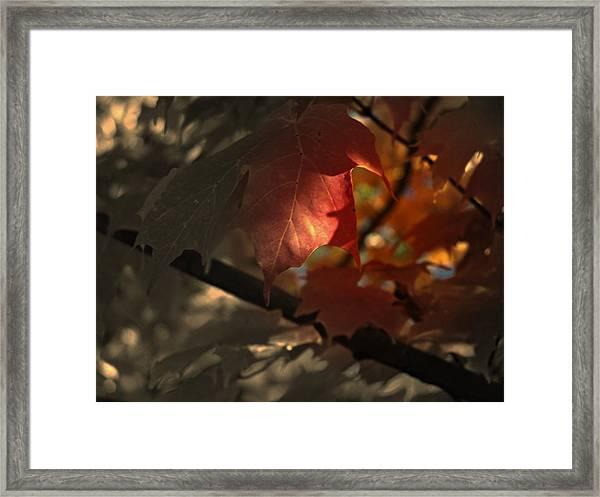 Fall Or Not Framed Print