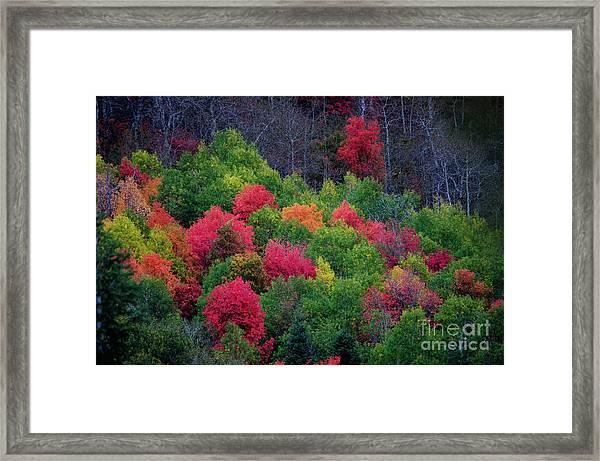 Fall Poppers Framed Print