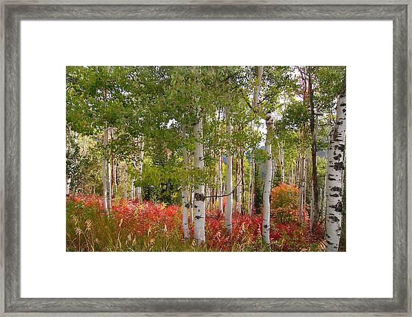 Fall Splender 47 Framed Print