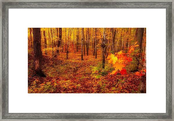 Fall Sugar Bush Framed Print