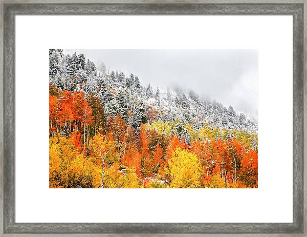 Fall To Winter Framed Print