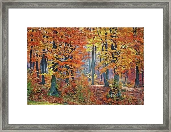 Fall Woods Framed Print