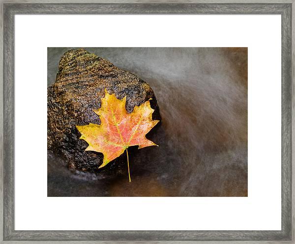 Fallen Leaf Framed Print by Jim DeLillo
