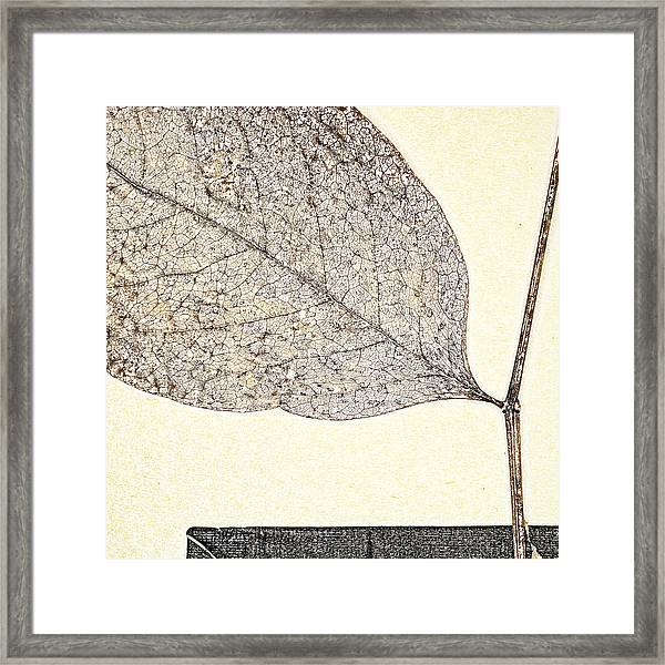 Fallen Leaf One Of Two Framed Print