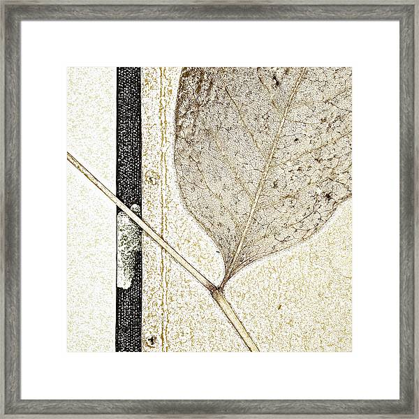 Fallen Leaf Two Of Two Framed Print