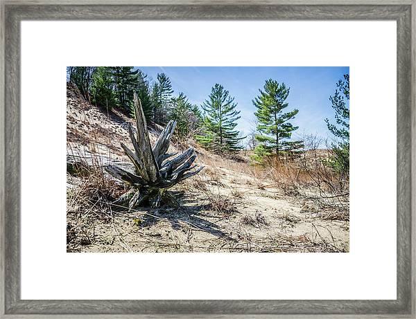 Fallen Tree At Warren Dunes Framed Print