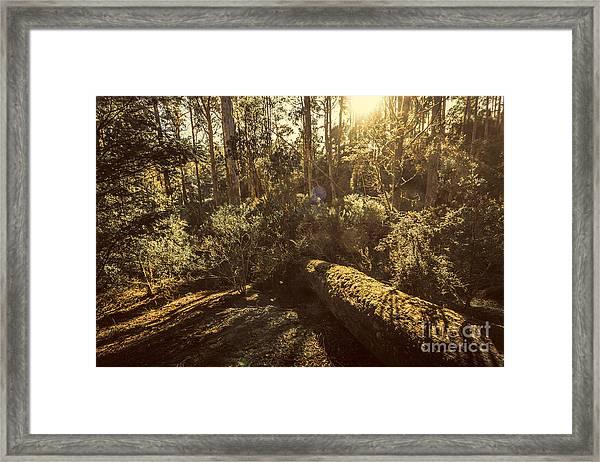 Fallen Tree In Foliage Framed Print
