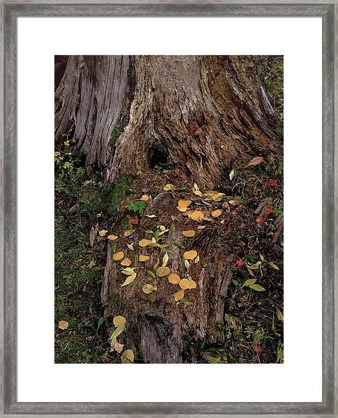 Fallen Tree Offerings Framed Print