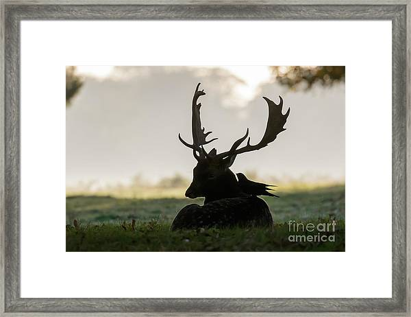 Fallow Deer With Friend Framed Print