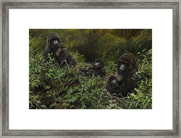 Family Of Gorillas Framed Print