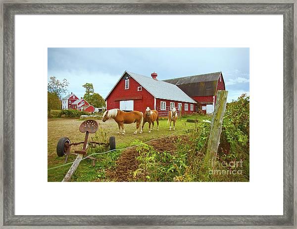Family On The Farm Framed Print