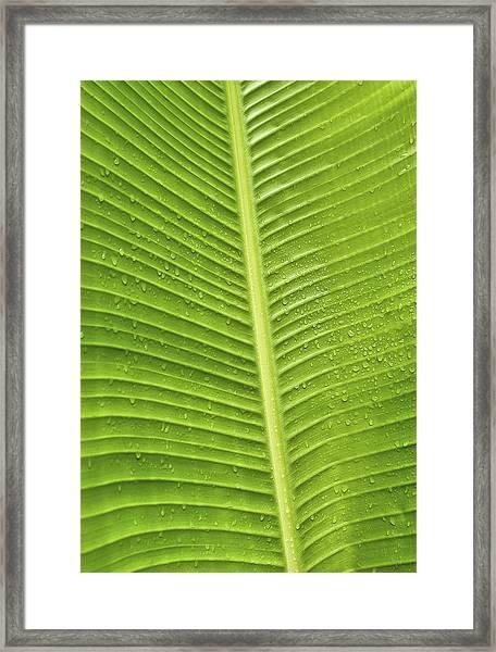Fan Palm Leaf Framed Print