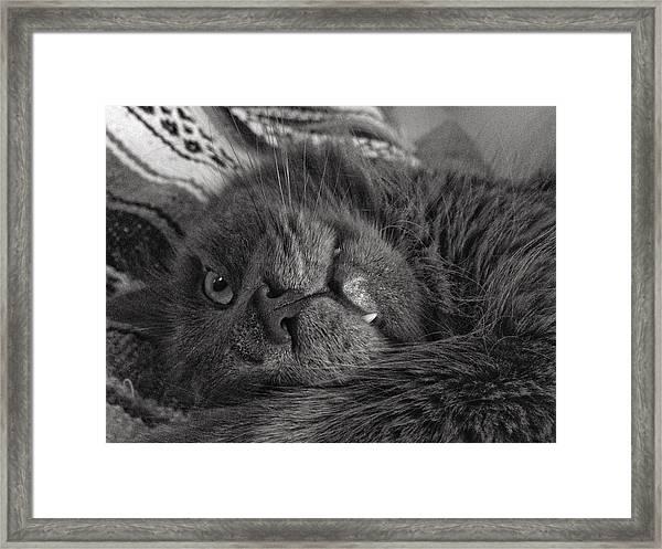 Fang  Framed Print