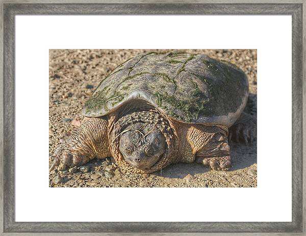 1013 - Fargo Road Turtle Framed Print