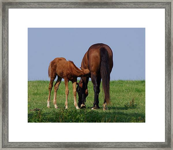 Farm Fresh Breakfast Framed Print