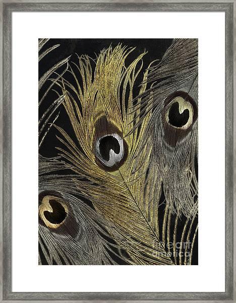Fashion Feathers II Framed Print