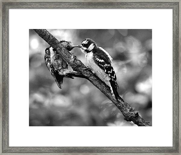 Father Feeding Son Framed Print