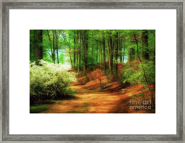 Framed Print featuring the photograph Favorite Path by Lois Bryan