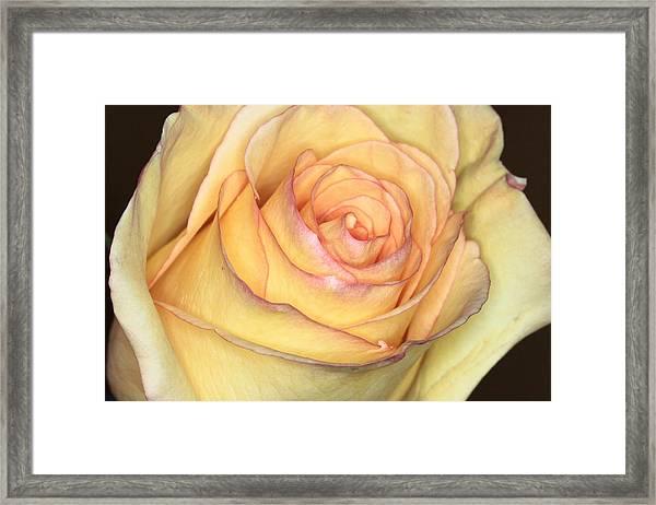Favorite Yellow Framed Print