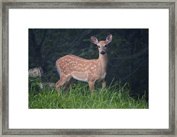 Fawn Doe Framed Print